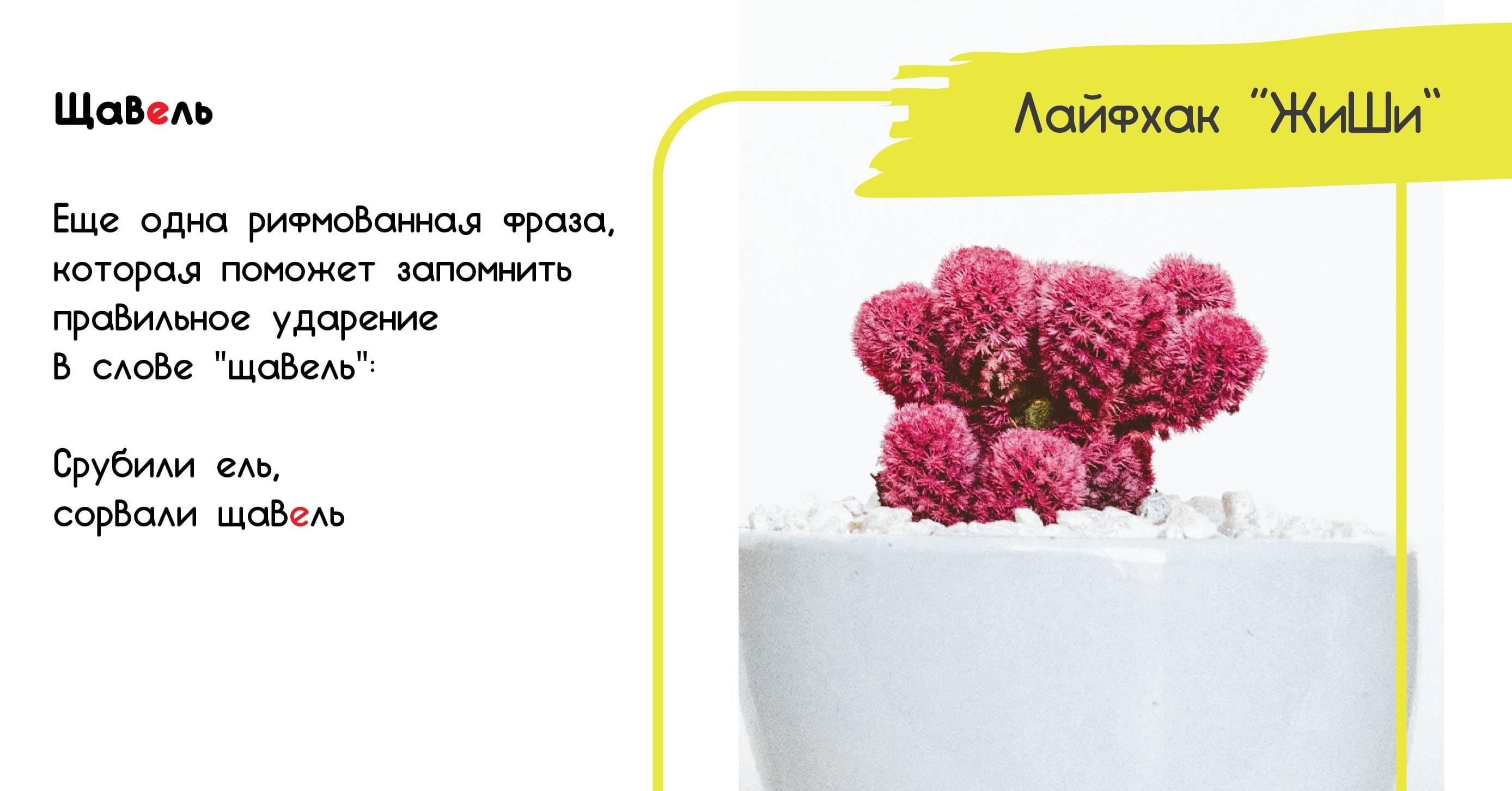 картинка правила русского языка ударение в слове щавель