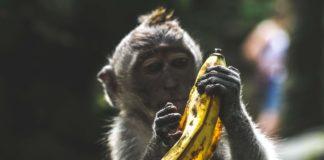 Картинка обезьяна