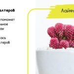 картинка русский язык ударение в словах