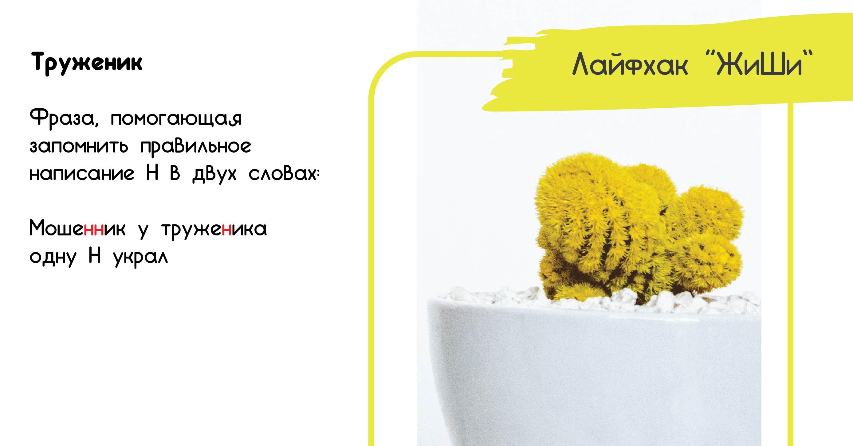 картинка правила русского языка буква н