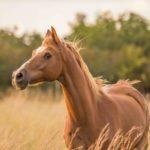 картинка значение выражения авгиевы конюшни