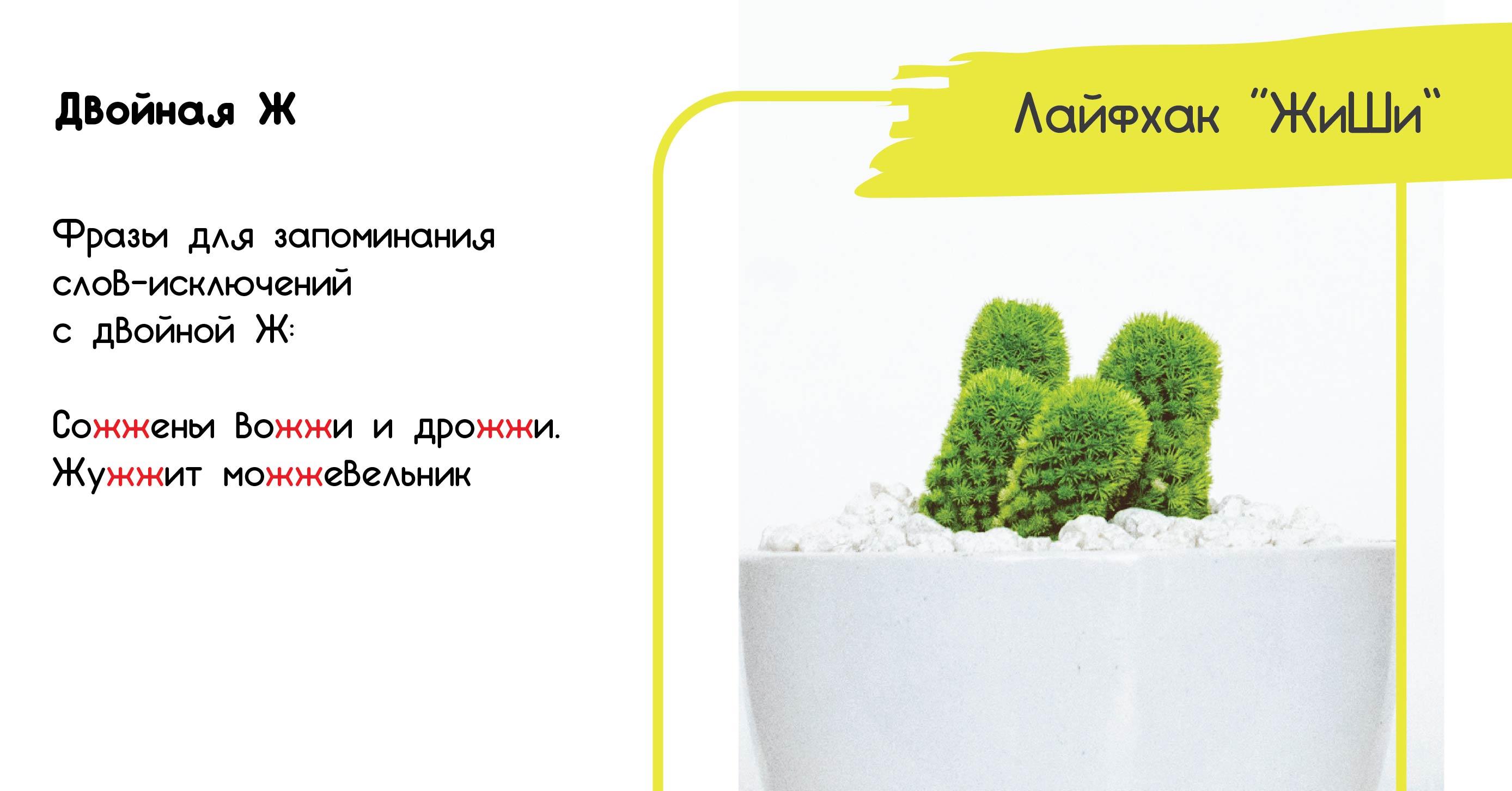 картинка можжевельник правила русского